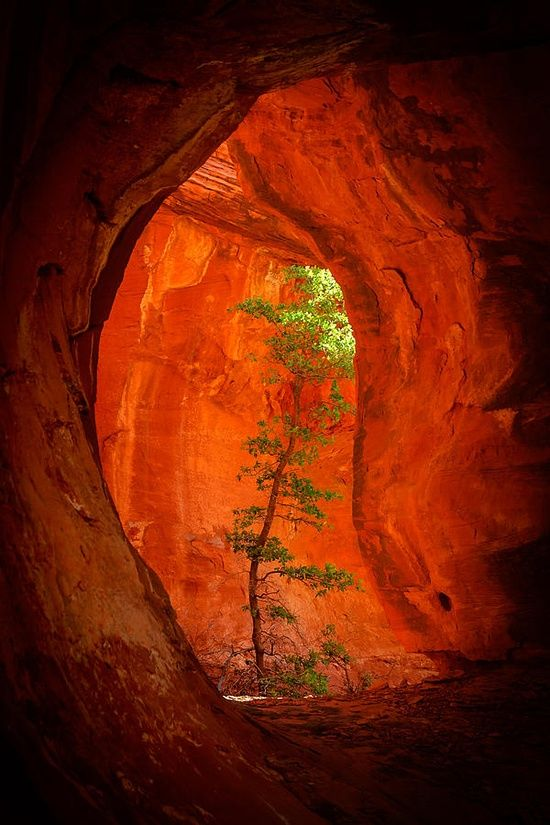 Boynton Canyon, by Scott McAllister