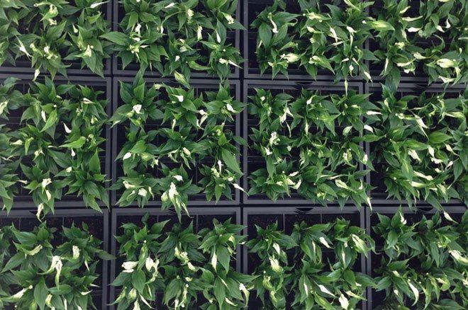 karoo Pflanzenwand Modulsystem
