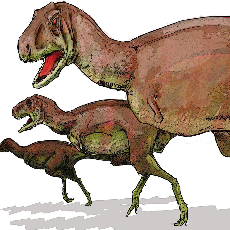 Provenzdinosaur T Rex Family Running Animalgeneric Cotton