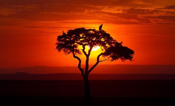 Solnedgang i Africa. Se mere på www.bravotours.dk @Bravo Tours #BravoTours #Travel