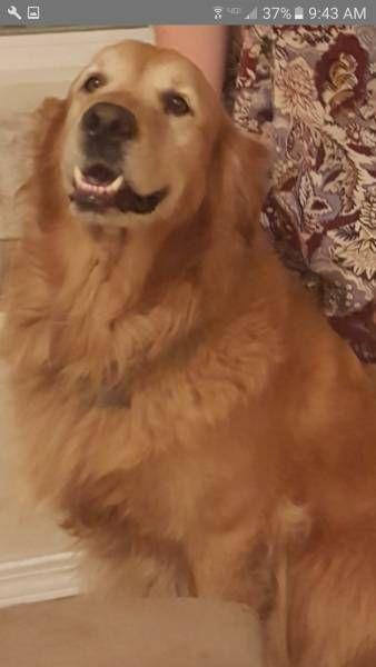 LOST DOG: 07/06/2017 - Santa Paula, California, CA, United States. Ref#: L32888 - #CritterAlert #LostPet #LostDog #MissingDog
