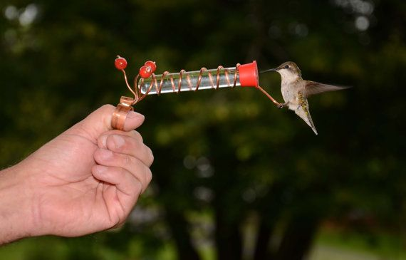 How To Get A Hummingbird To Land On Your Finger