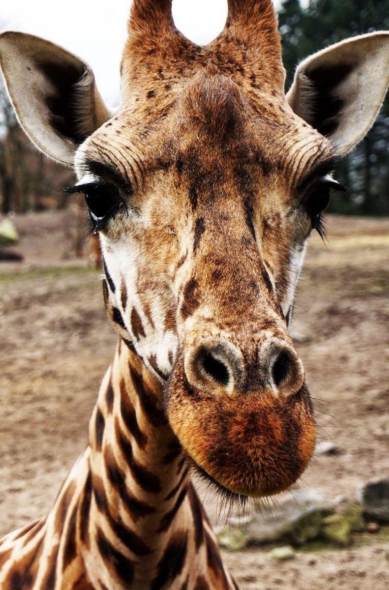 Pinterest Pindemi Animals Animals Beautiful Safari Animals