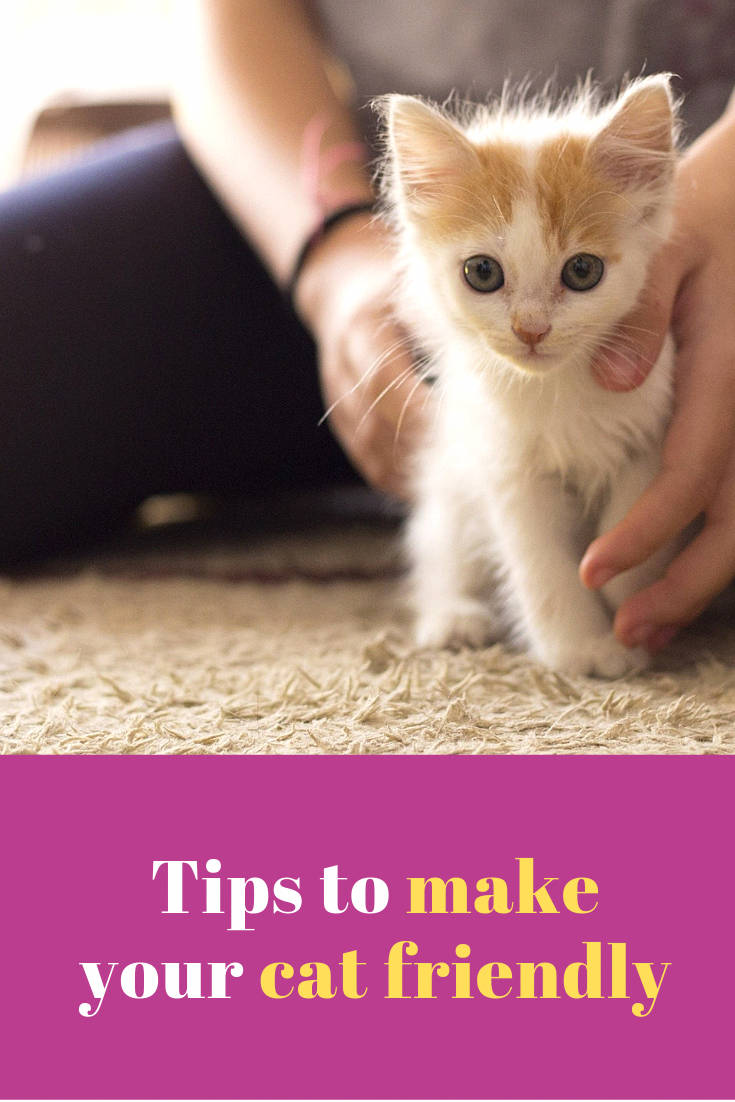 Tips To Make Your Cat Friendly In 2020 Cat Training Cats Baby Cats