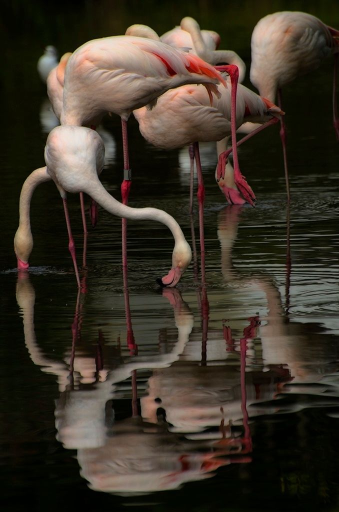 Flamingo | by Audran Gosling on 500px