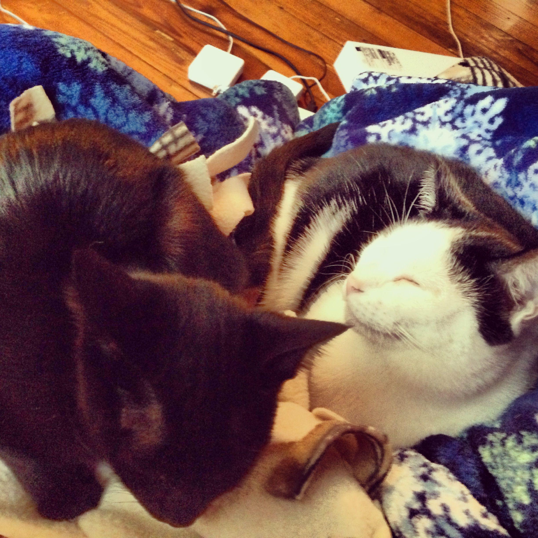 liza and lyric my sweet kitties :)
