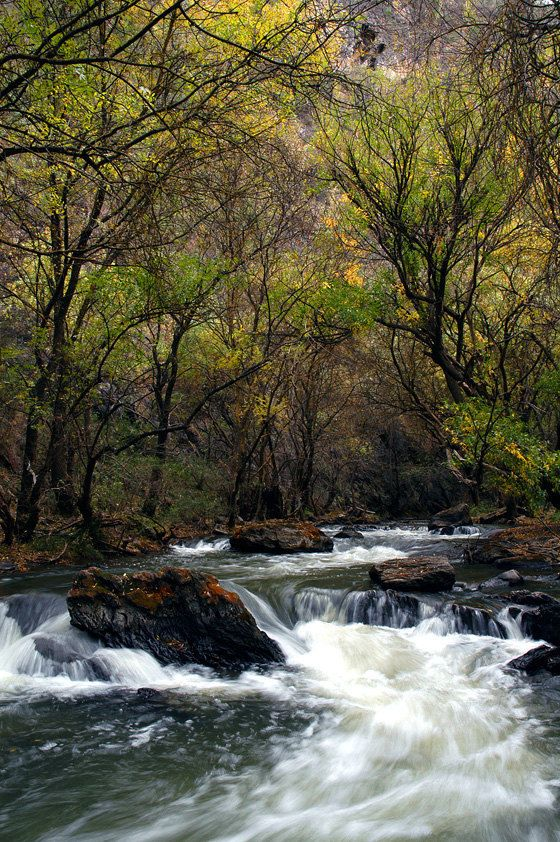 Nature Photography River In The Forest Green Trees By Colourscape 15 00 Beautiful Landscape Photography Nature Photography Nature