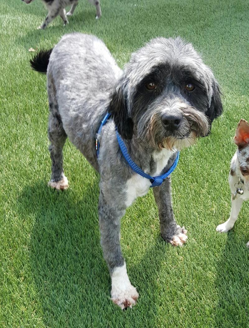 Shih Tzu Puppies St Louis Missouri References