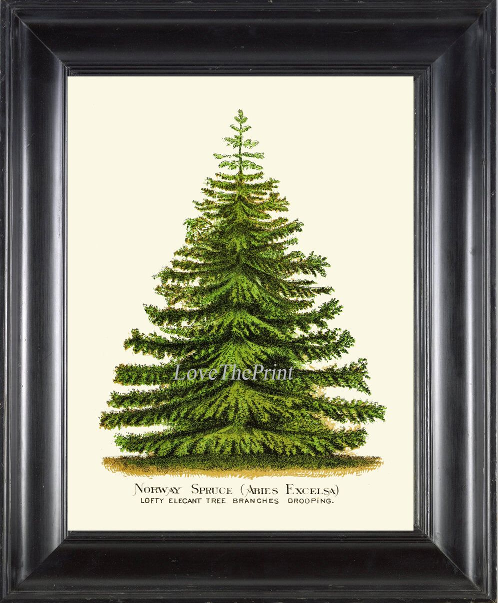 Christmas Tree Pine Print Wall Art Beautiful Botanical Green Etsy In 2020 Wall Prints Wall Art Prints Decorating With Pictures