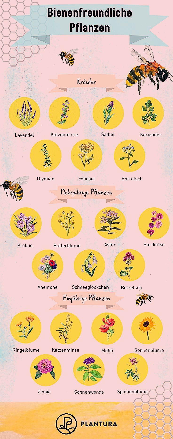 Photo of Bienenfreundliche Balkonpflanzen: 15 Balkonpflanzen für Bienen – Plantura