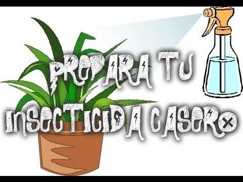Insecticida Casero Para Combatir Plagas Pulgon Cochinilla Arana Roja Mosca Blanca En Las Plantas Yout Plagas En Las Plantas Insecticida Insecticida Casero