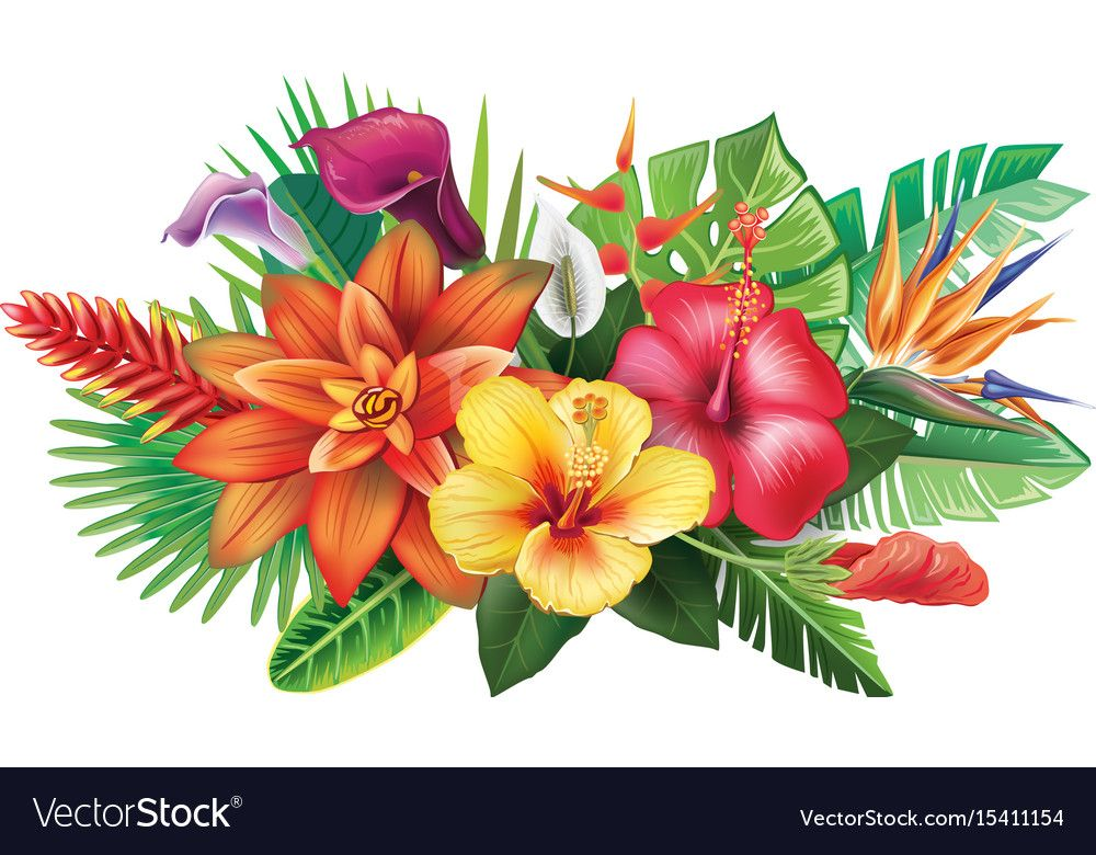 Arrangement From Tropical Flowers Vector Image On Avec Images