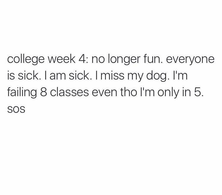 College Life Week 4 School Quotes Funny Funny Quotes College Memes
