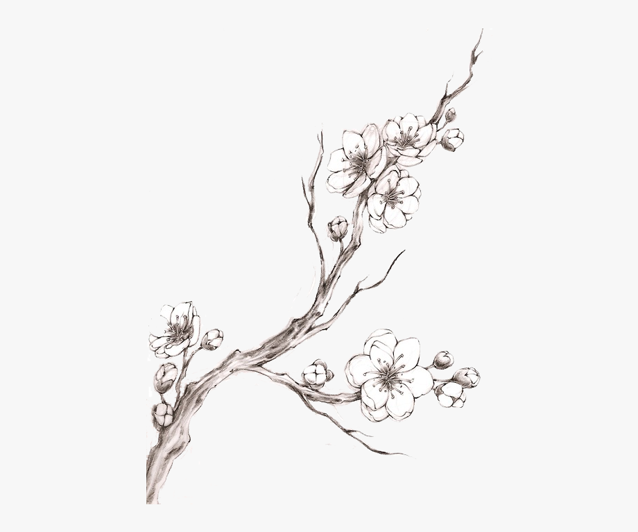Cherry Blossom Drawings Free Google Search Cherry Blossom Drawing Cherry Blossom Branch Apple Blossom Tattoos