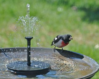 Moving water attracts more birds Solarpowered fountain pictured