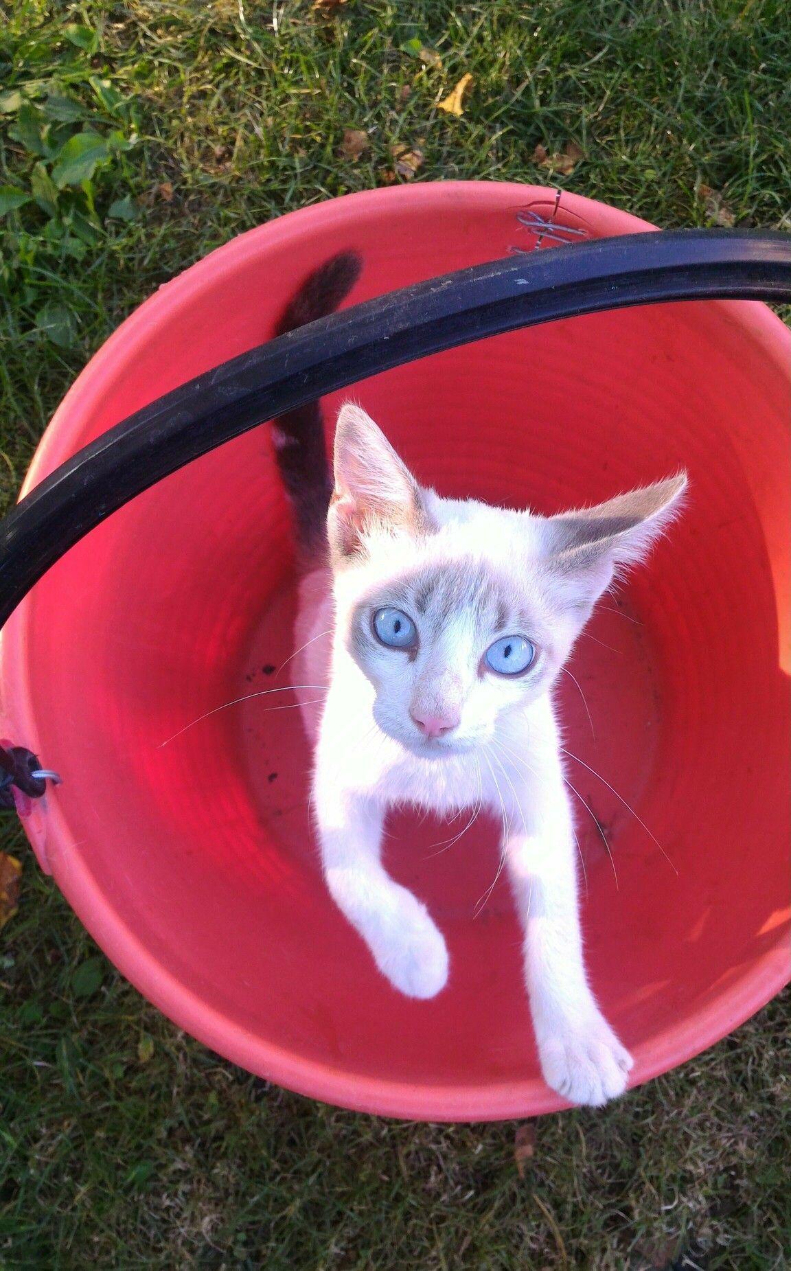 Il gatto nel secchio!