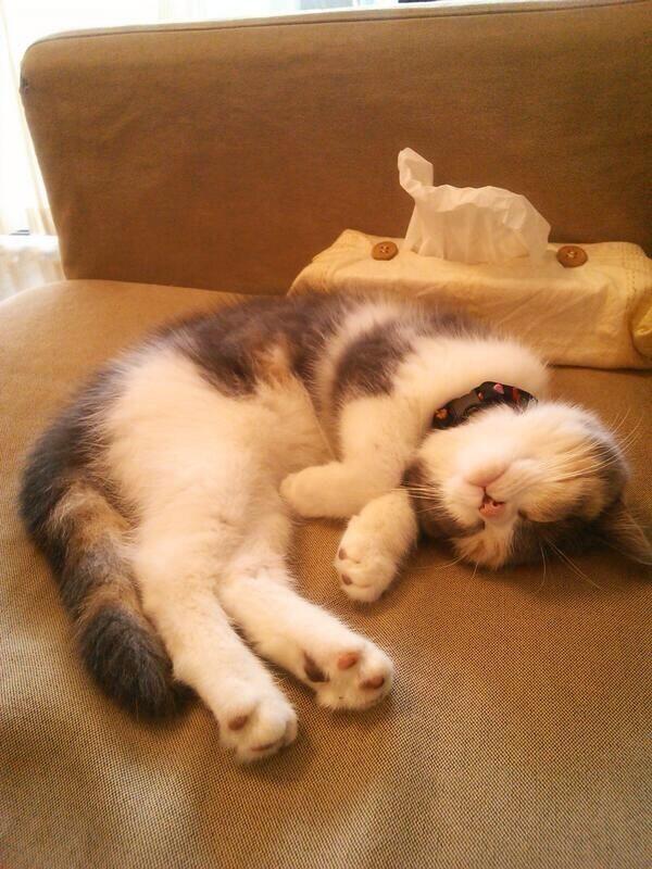 Nyap #neko #cat  (via nekotarechin)