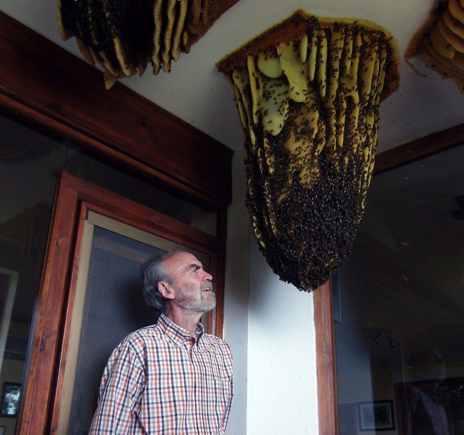 Honeybee home invasion