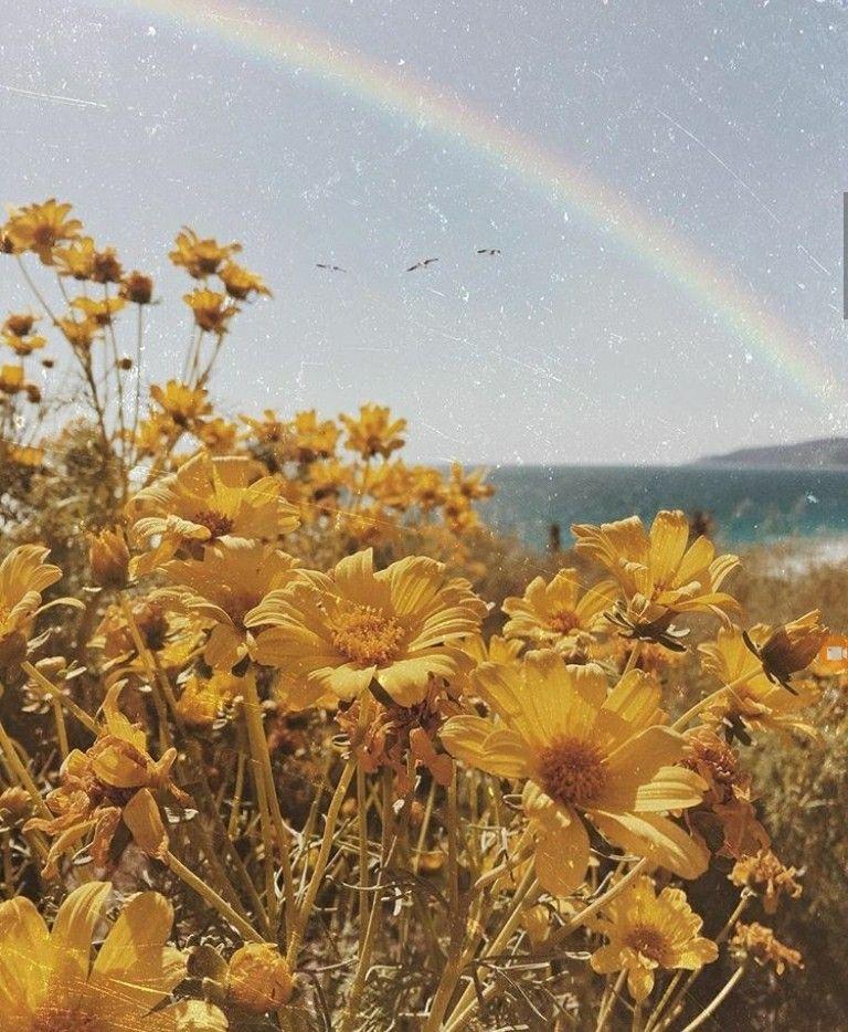 pinterest: weareallqueens ∵☾∴ | Flower aesthetic, Yellow ...