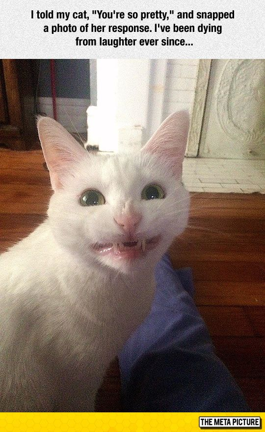 You're So Pretty Funny animal pictures, Funny cat