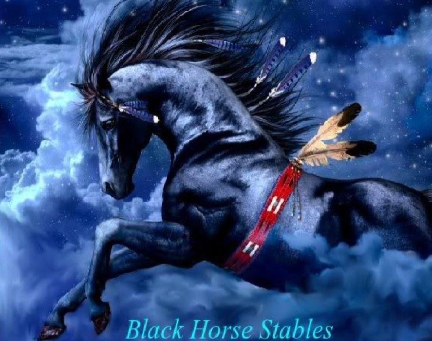 Black Horse Spirit Native American Horses Indian Horses Horse Wallpaper