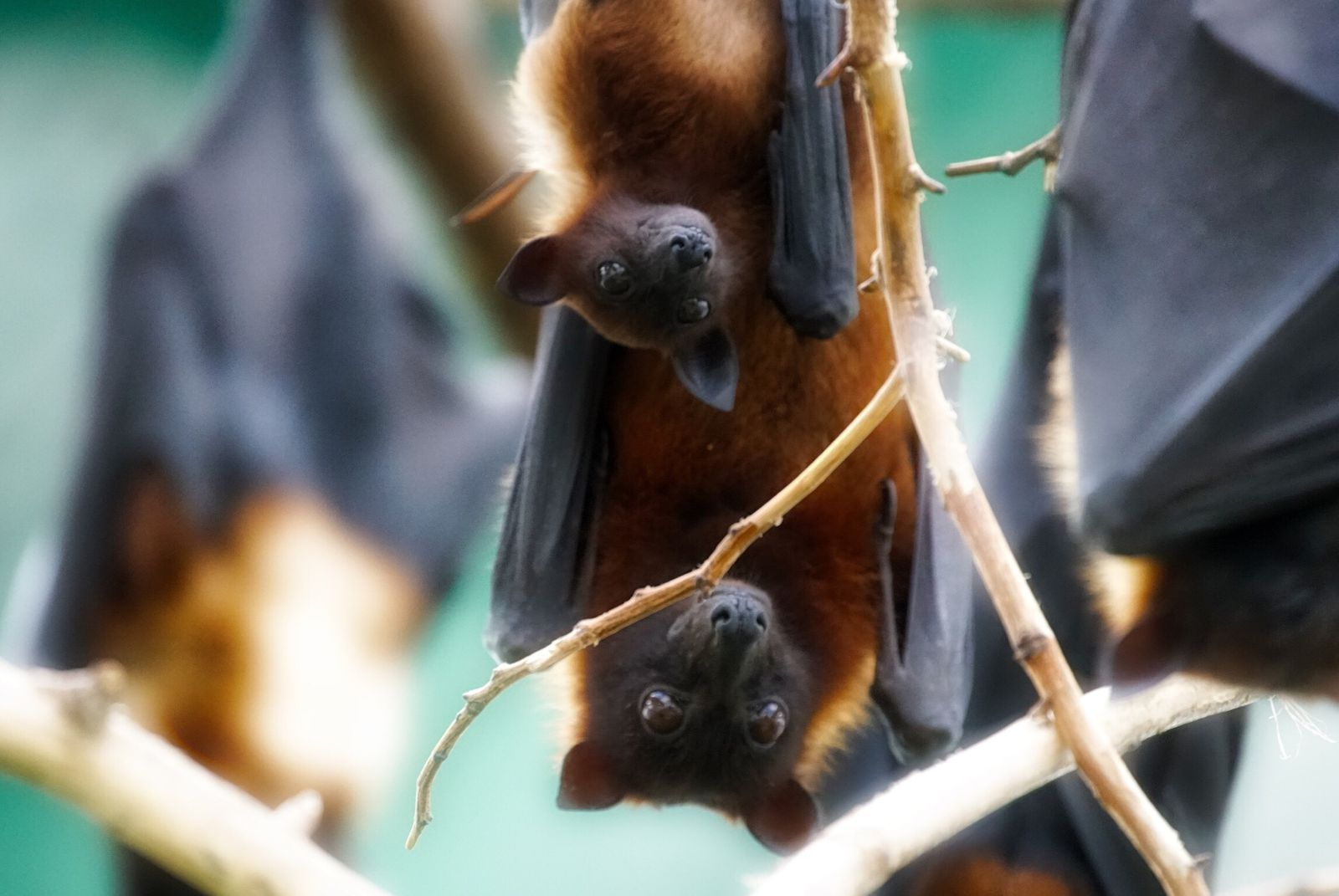 5 ways to attract bats to your yard how to attract bats