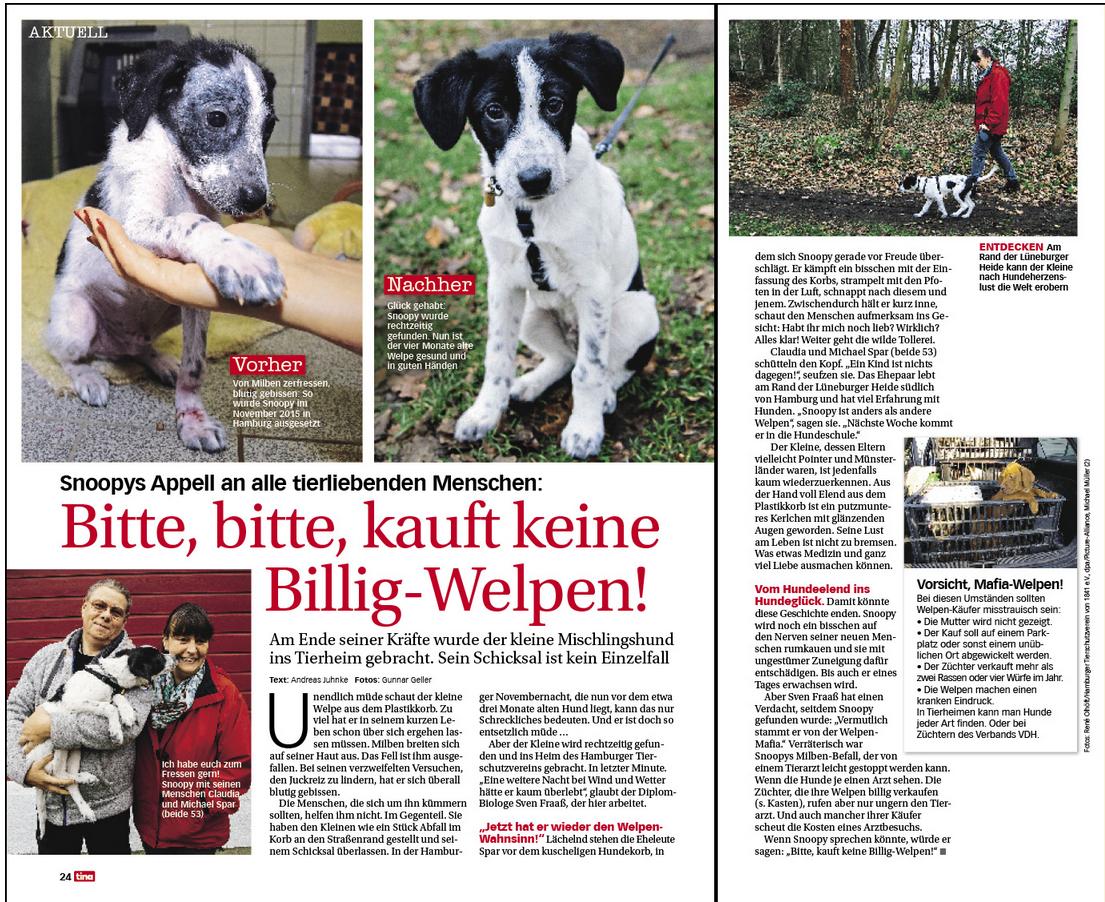 Pin Von Dirk Bernhart Auf Tiergeschichten Mischlingshunde Hunde