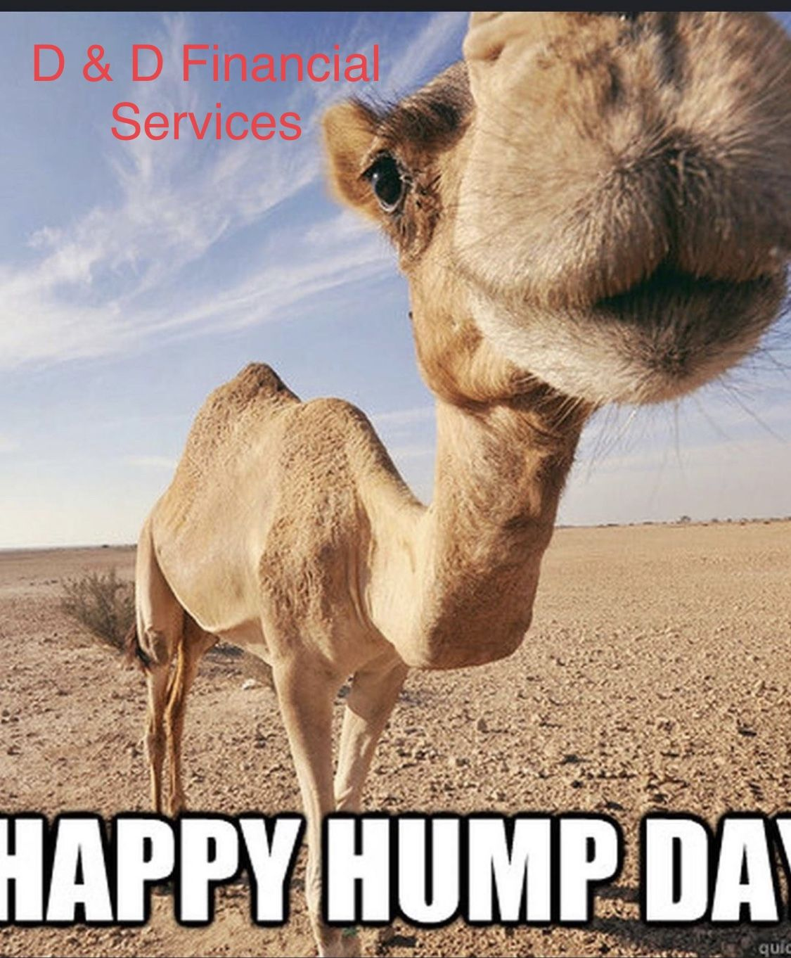 Happy Hump Day Funny Hump Day Memes Hump Day Quotes Hump Day Humor