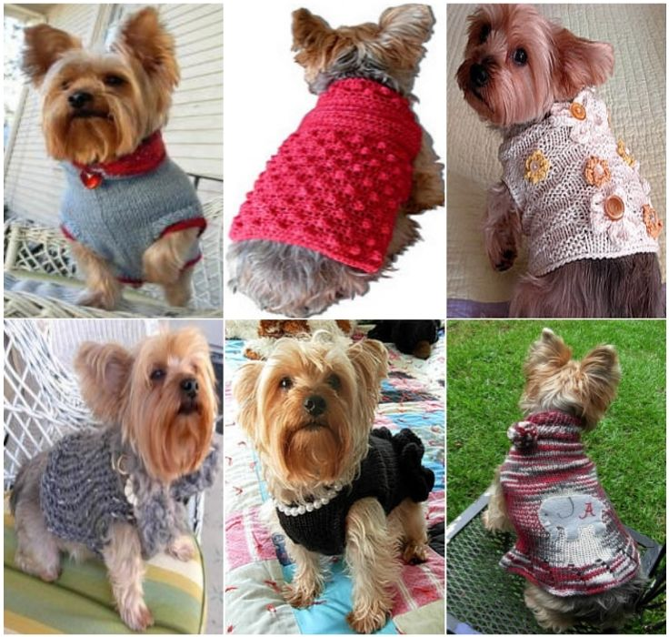 Crochet Dog Sweaters Free Crochet Patterns Video Tutorials - 22 adorable animals wearing miniature sweaters