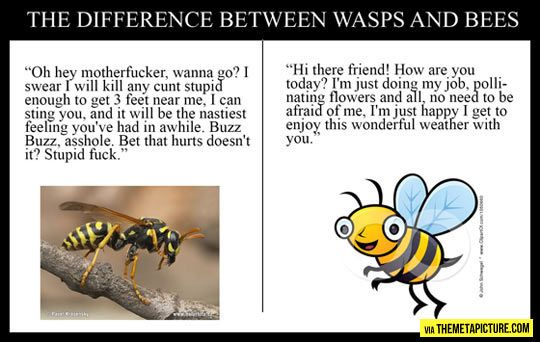 The Difference Between Wasps And Bees Sarcastic Wasp Sarcastic Quotes