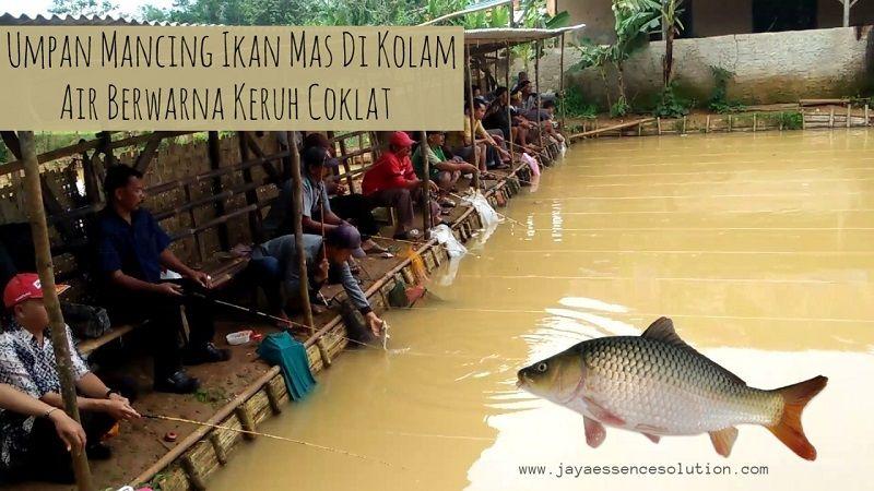 Resep Umpan Ikan Mas Air Keruh Coklat Terbaru 2018 Yang Sudah Diuji Coba Oleh Para Angler Dan Terbukti Mendapatkan Juara 1 Hanya Dengan Menambahkan Essen Da Fish