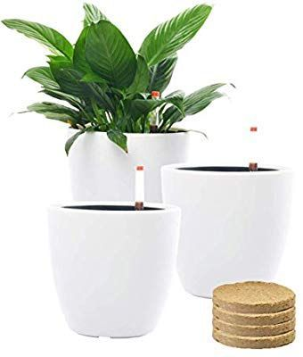 7 Self Watering Planter Pots with Coco Soil for Home Garden Outdooamazoncom