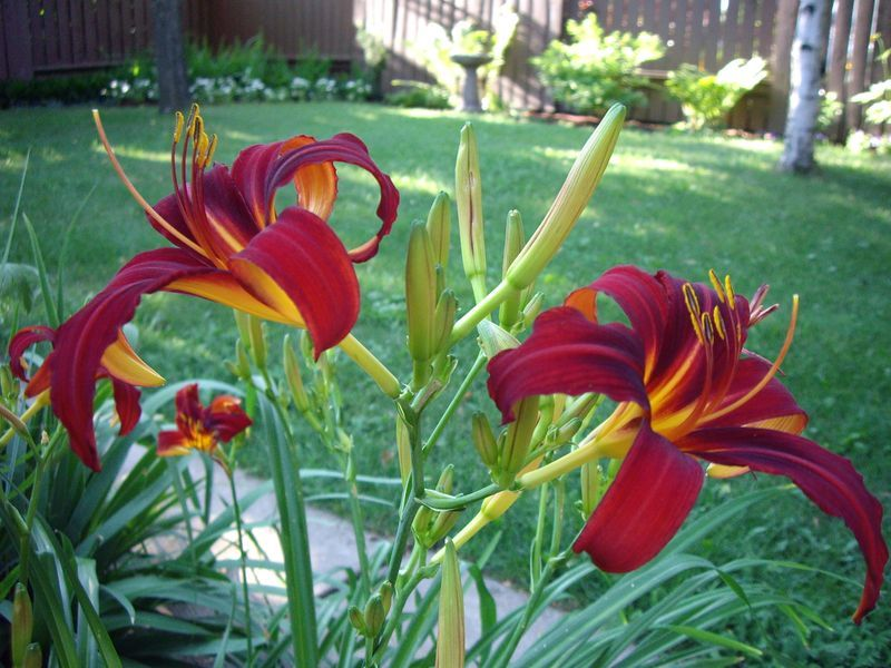outdoor plants that grow well in alberta canada - Plants That Do Well In Shade