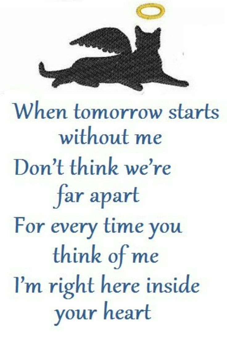 Loss Of A Pet Quote Cat Grieving  Cat Quotes And Words  Pinterest  Cat