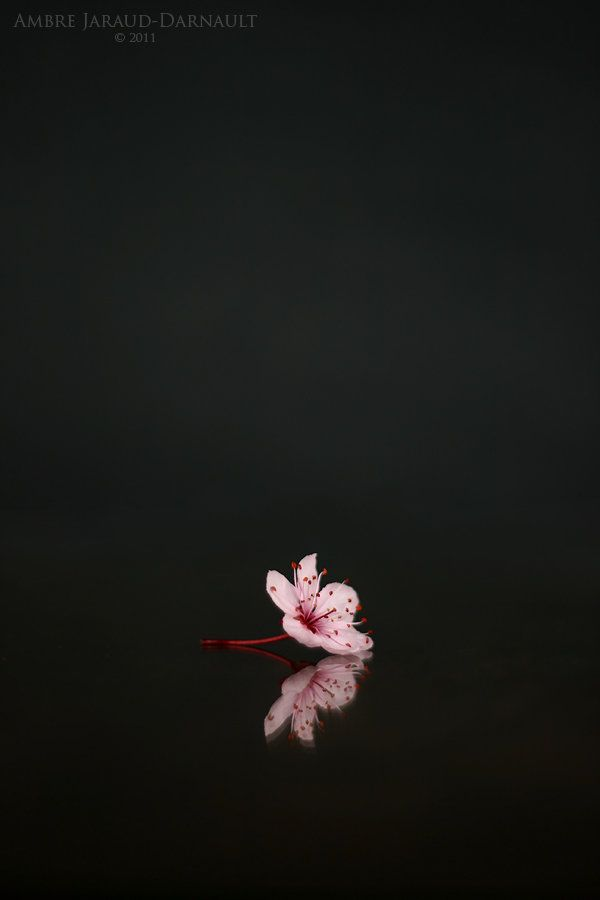 Sometimes Less Is More Nature Photography Flower Wallpaper Nature