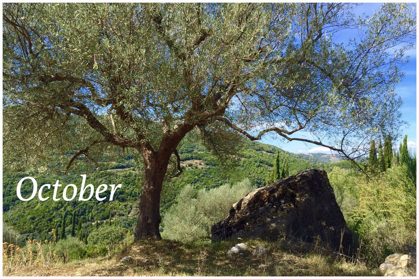 Have a great month!  >  October is the month that the olive picking season begins!  (photo by Melia Freshline)