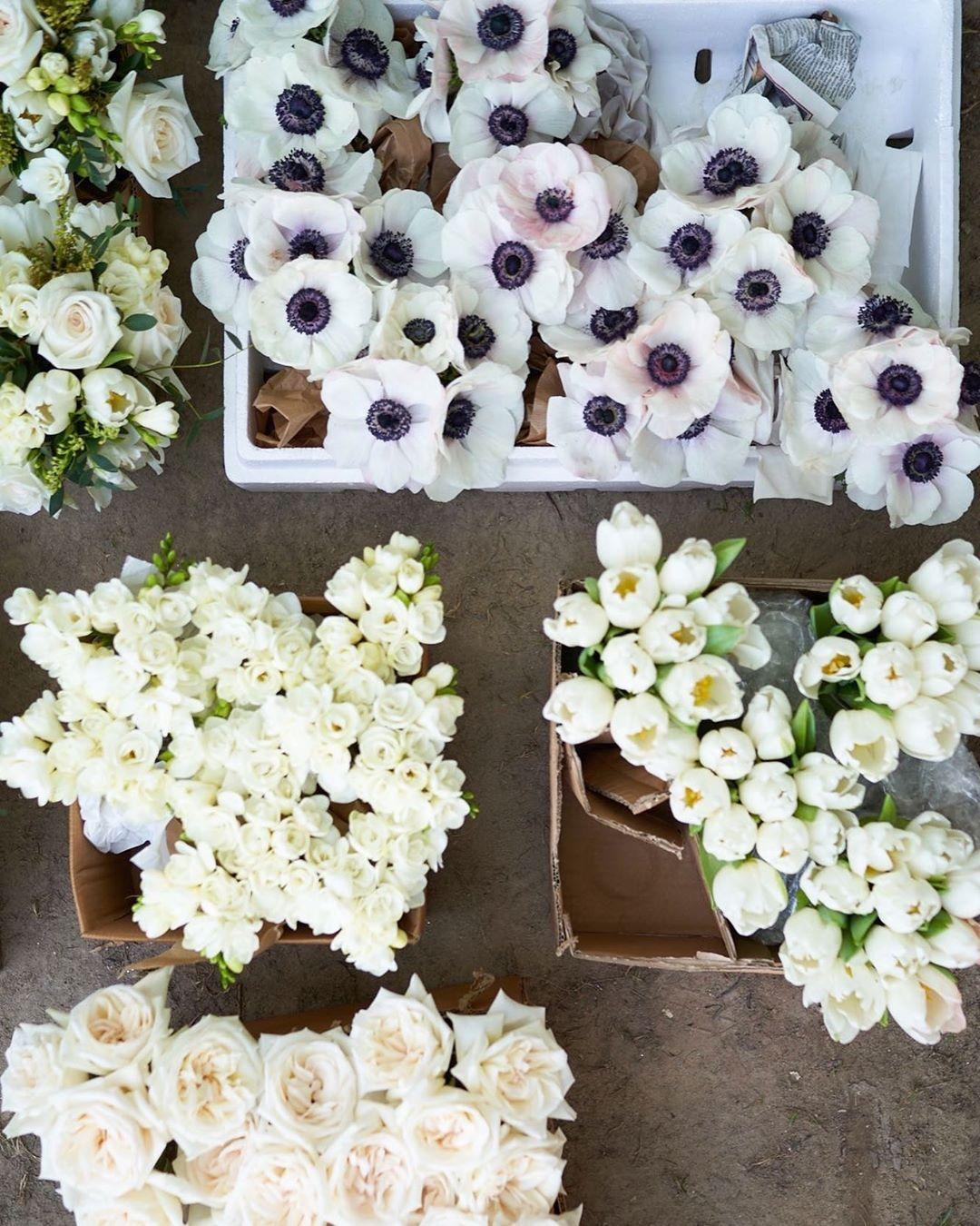 Singapore Flower Bahrain On Instagram Dear Anemones How We Miss Thee Matttakespictures1 Anedenaffair Floraldesign Seasonal Flowers Anemone Flowers