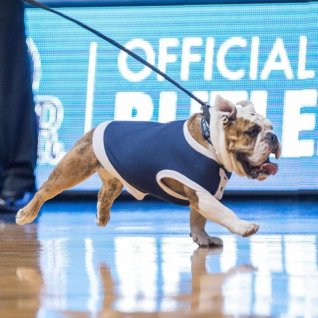 Back Leg Air Time Photo By Zjbphotography Godawgs Home Sweet
