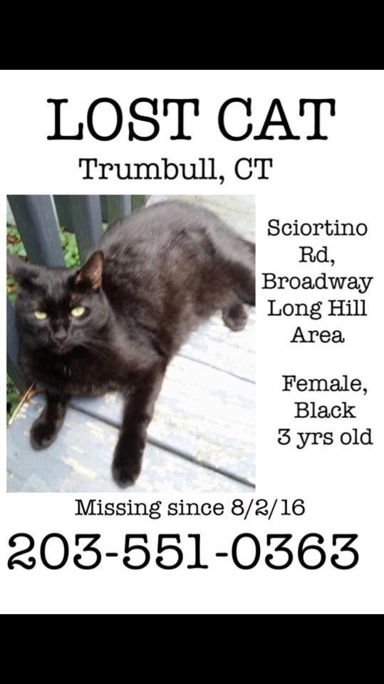 Trumbel Black Cat Https Www Facebook Com Groups 826596090765624