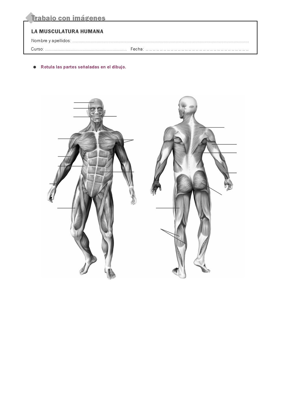 RECURSOS PRIMARIA   Láminas mudas del cuerpo humano ~ La Eduteca