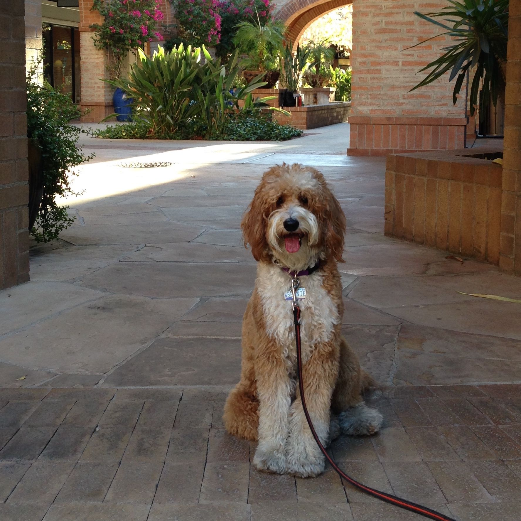 How to Register Your Dog for AKC Canine Partners | Dog