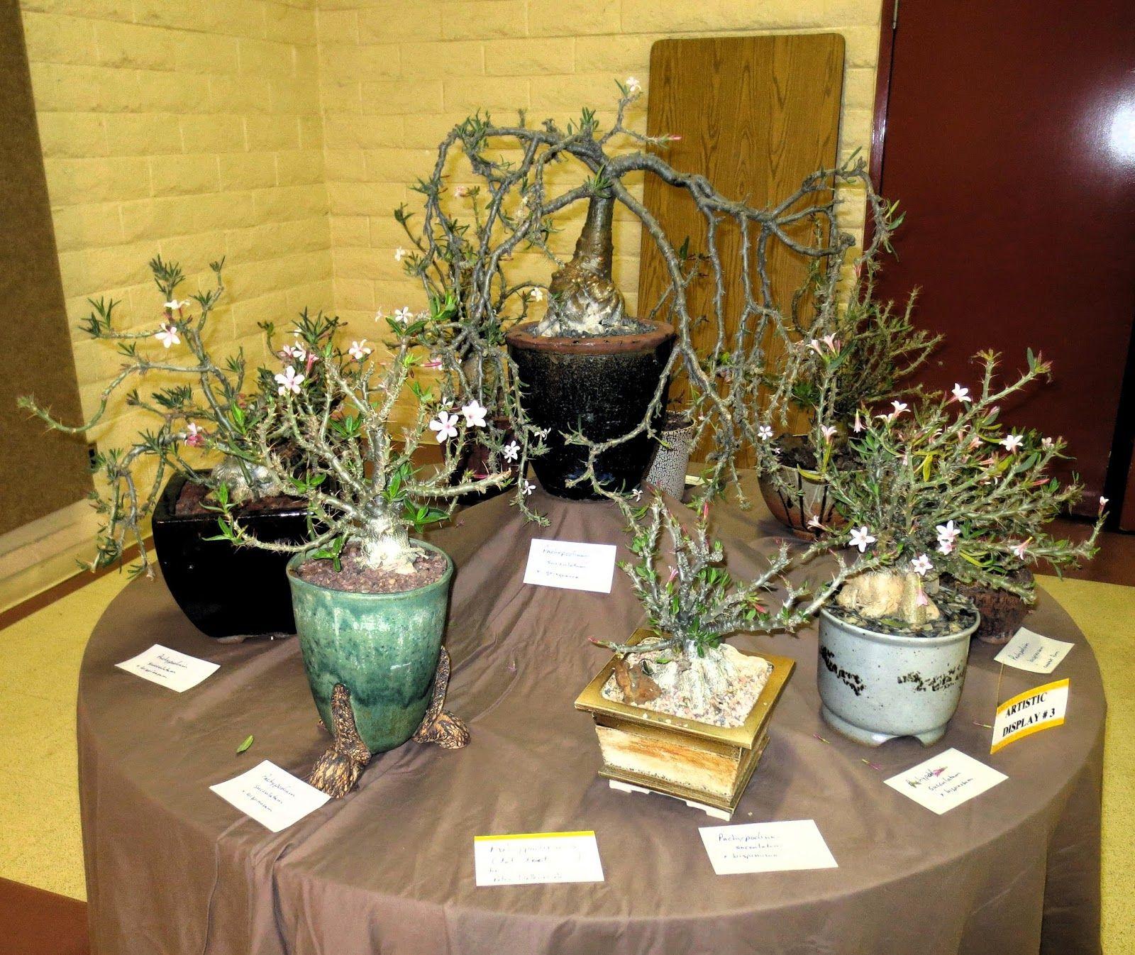 Cactus & Succulent Show & Sale Succulents, South coast
