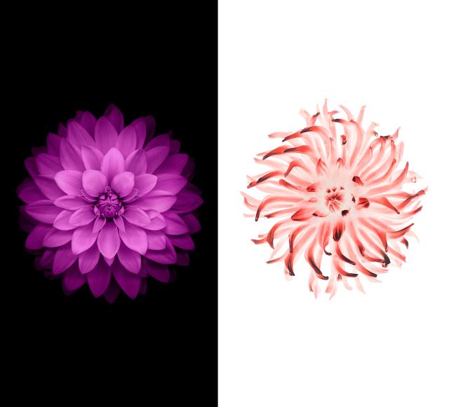 лет картинки цветка как на айфоне ноябре можно успеть