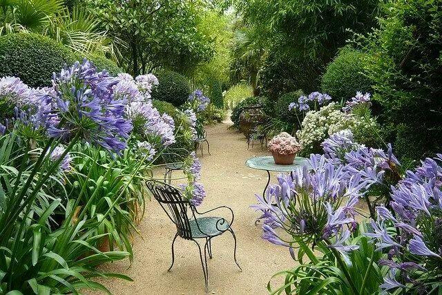 Awesome agapanthas!!! Bebe'!!! Lovely garden area!!!