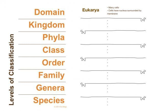 STEM Club Scientific Classification and Dichotomous Keys – Taxonomy Classification Worksheet