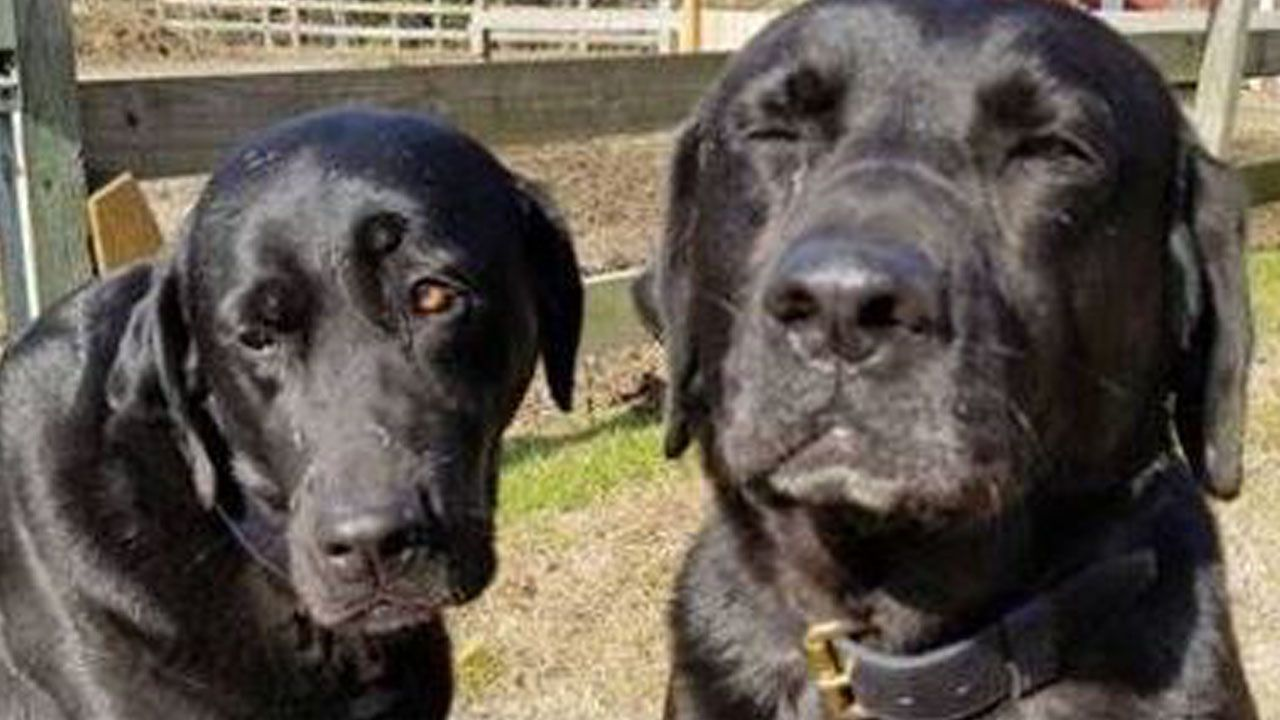 Dogs 'Write' Note to Mail Carrier Apologizing for Eating