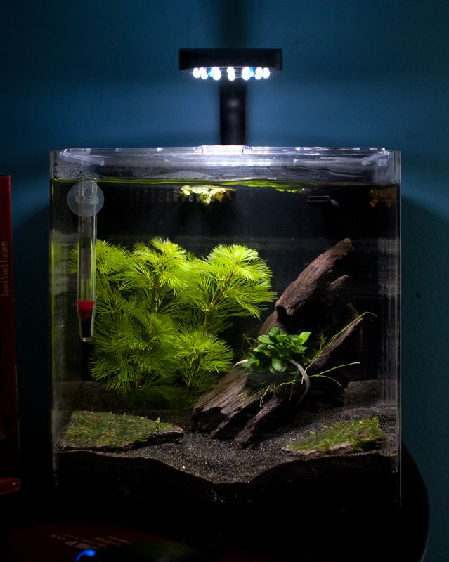 4 gallon tank oceanic systems inc evolve 4 led light for Live fish tank