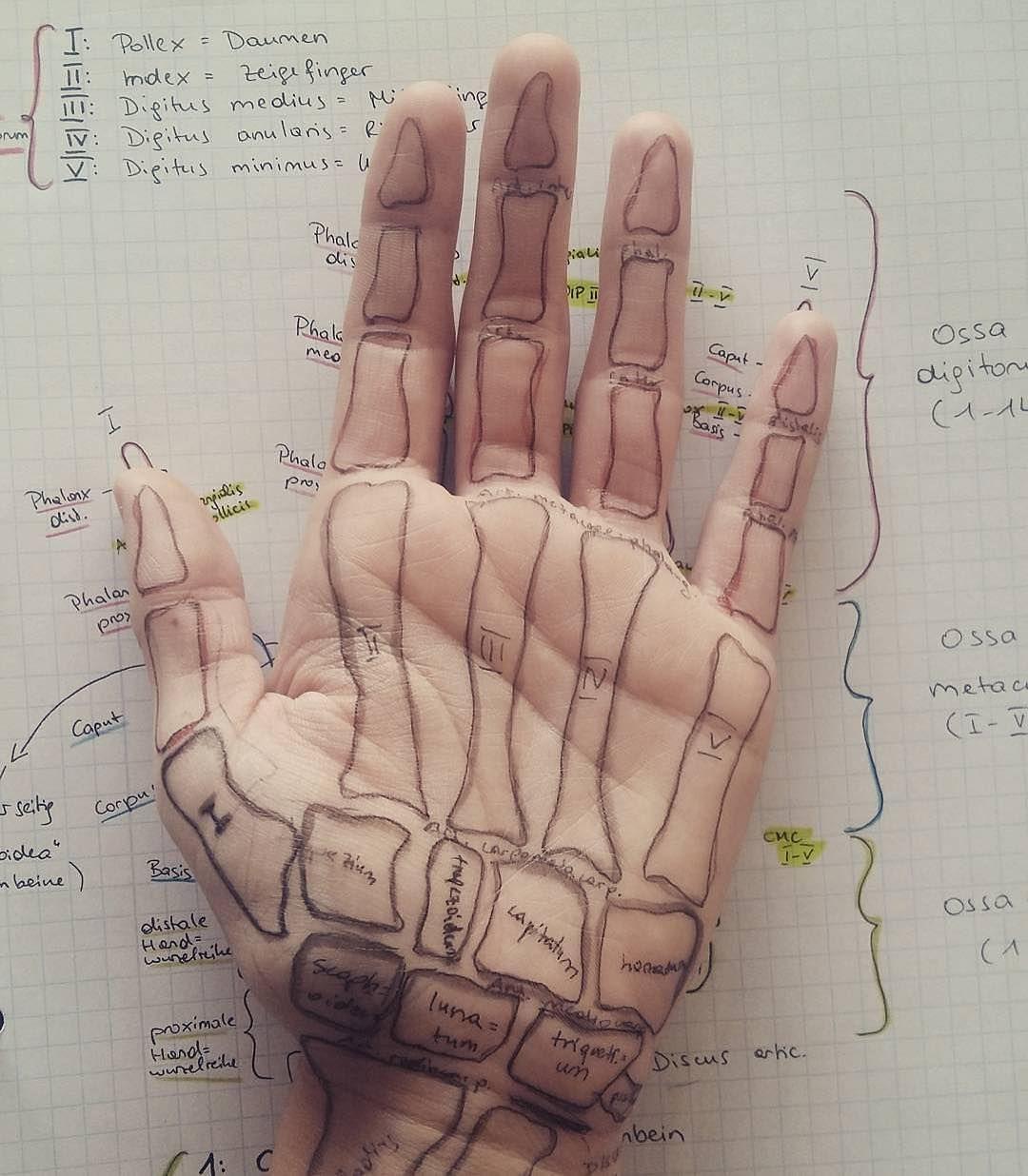 Really Creative idea easy way to learn anatomy Photo credit: Ronja ...