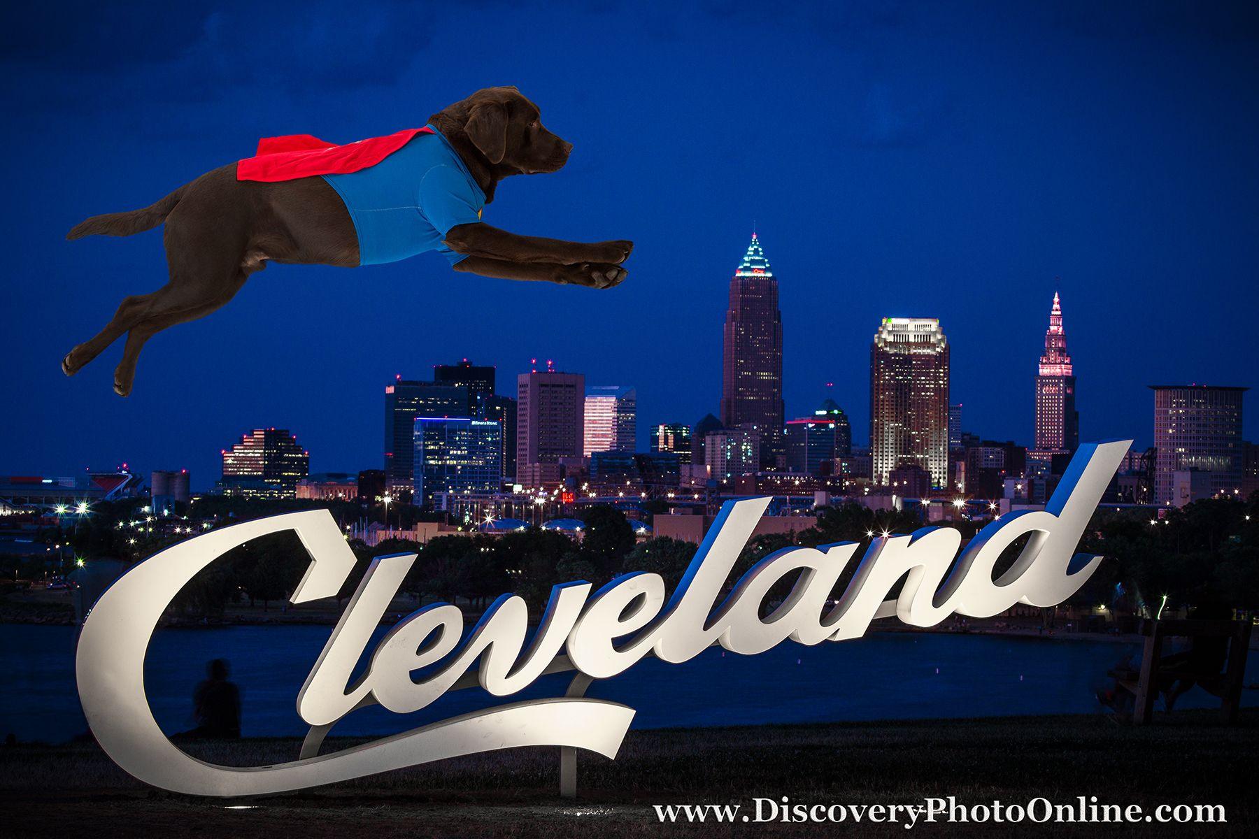 Super Cedar, Cleveland, Cedar the service dog, Chocolate