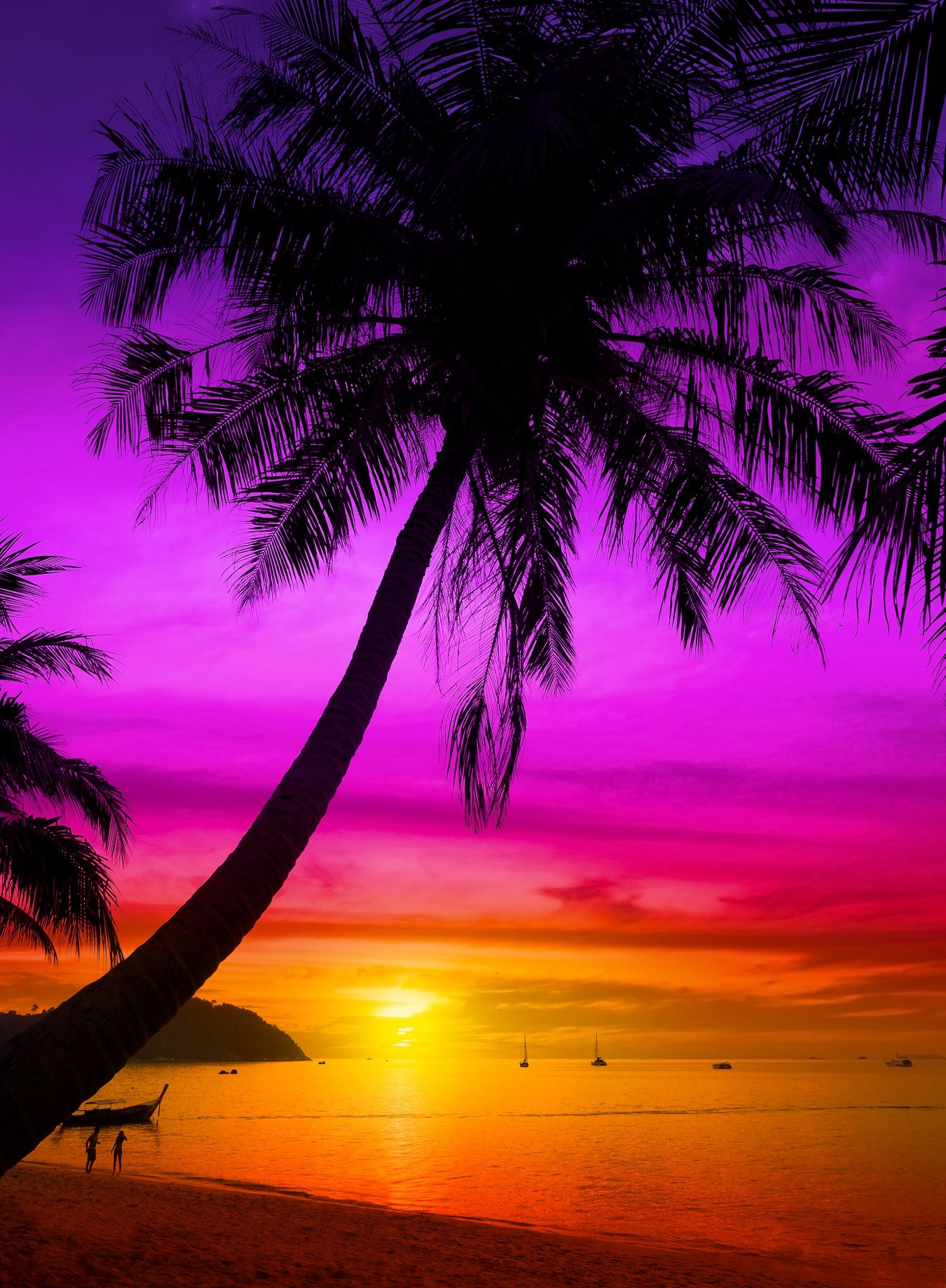 Palm tree silhouette on tropical beach at sunset ...
